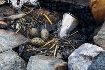meriharakan-munat-nuotiossa