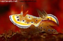 twin-magnificent-slug-nosteli-helmojaan